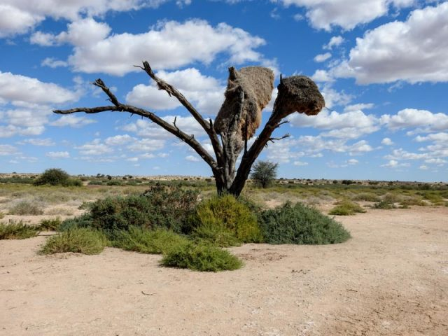 Kalahari-Waking-Trail-21