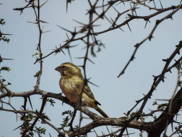 Kalahari-Waking-Trail-23