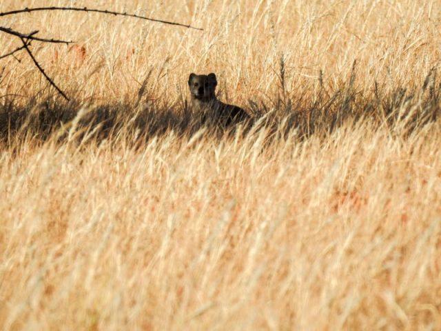 Kalahari-Waking-Trail-24