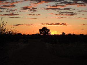 Kalahari-Waking-Trail-27
