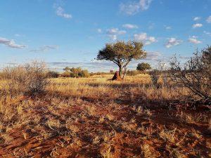 Kalahari-Walking-Trail-Titelbild