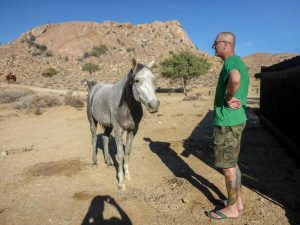 Klein-Aus-Vista-Pferd