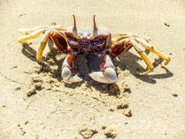 Krabbe-Koh-Jum