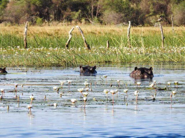 Okavango-Delta-05