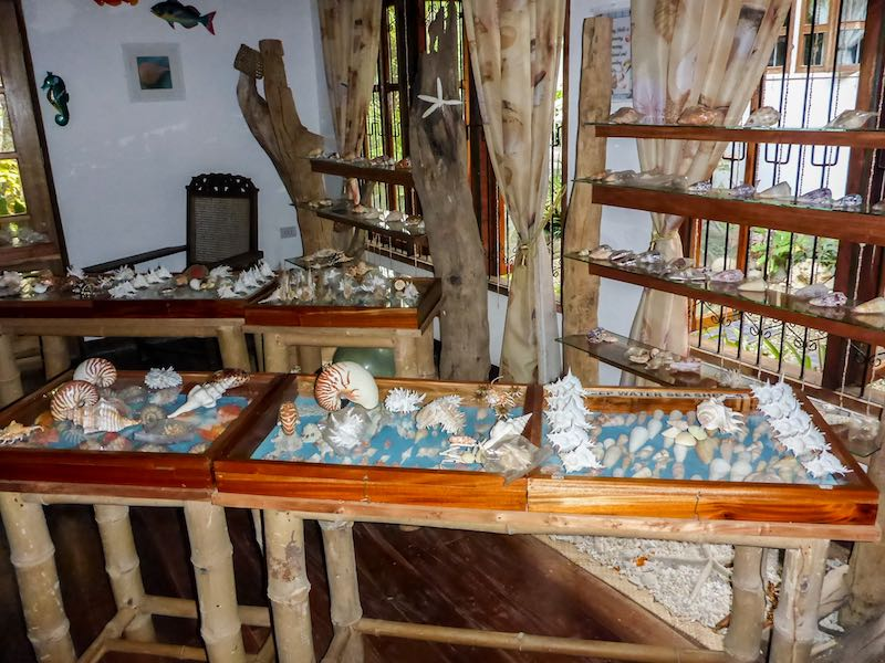 Siquijor Sea Shell Museum