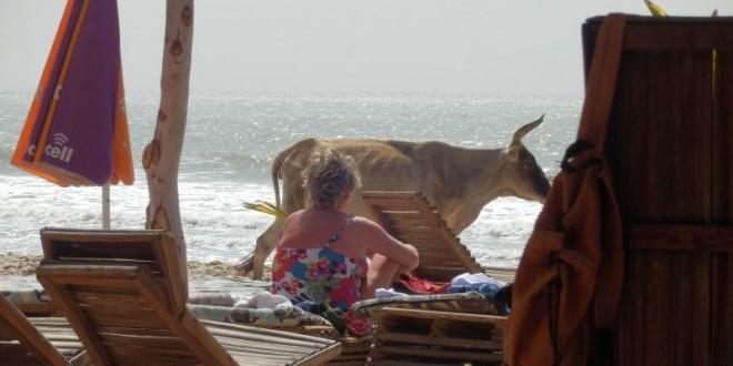 Ein ganz normaler Tag am Strand... 1