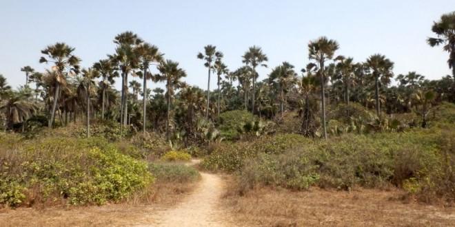 Unser zweiter Besuch im Bijilo Forest Park 9