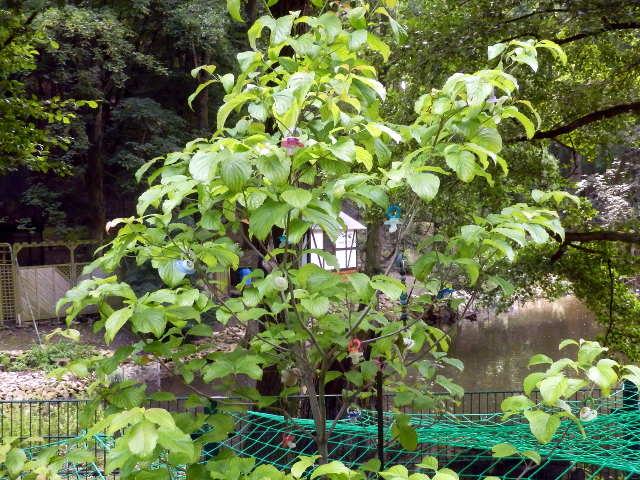 Schnullerbaum im Wildpark Wernigerode