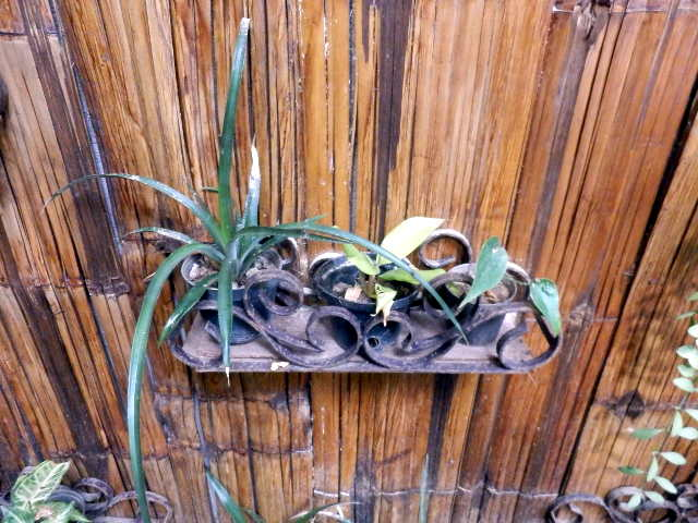 Pflanzen vom Farmers House