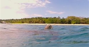 Pandan-Island-Titelbild