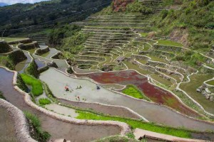 Philippinen-Reisterrassen