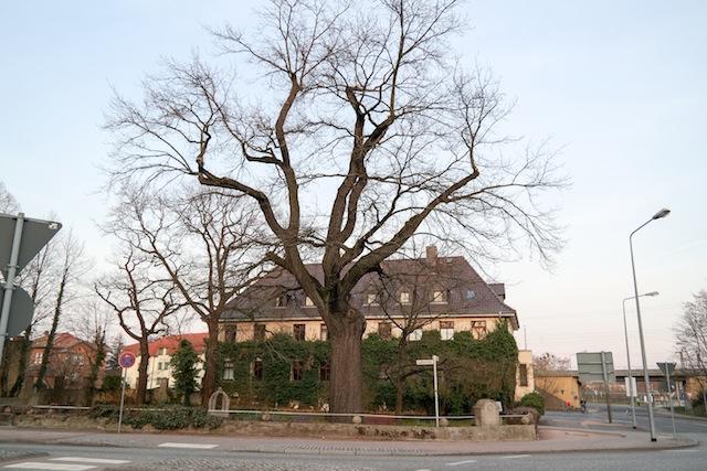 Rundgang-Lutherstadt-Wittenberg-08