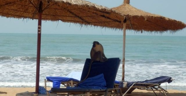 Senegambia Beach Hotel ein Hotel für Tierfreunde 1