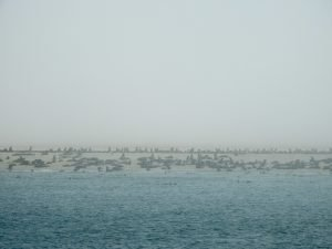 Walvis-Bay-Bootstour-07