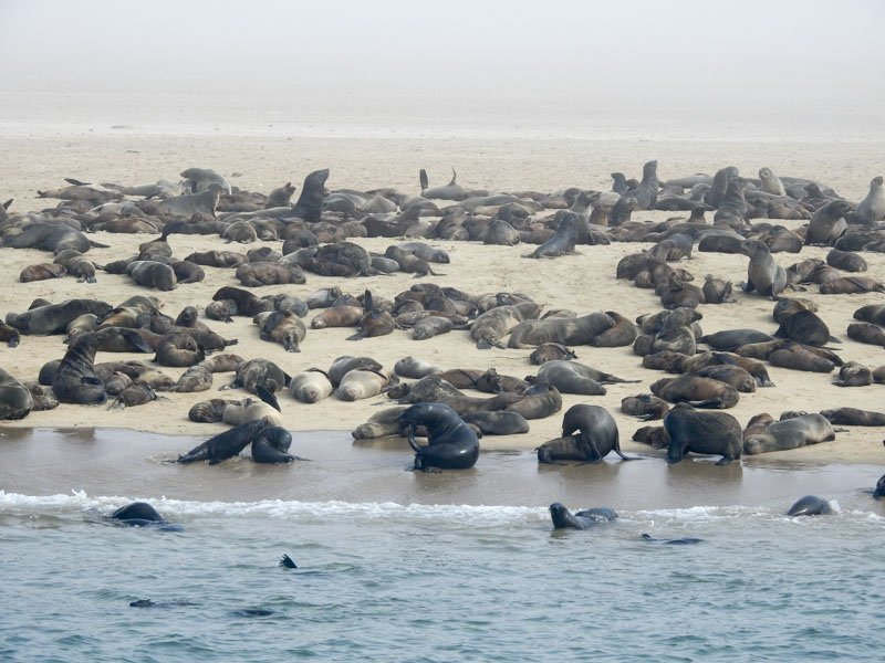Walvis-Bay-Bootstour-08
