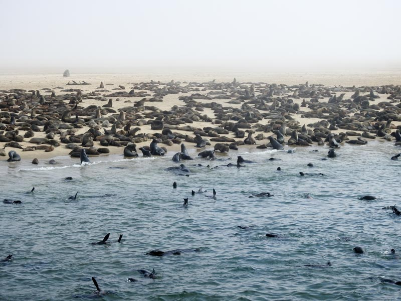 Walvis-Bay-Bootstour-10
