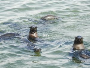 Walvis-Bay-Bootstour-11