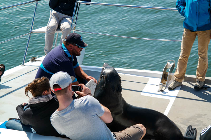 Walvis-Bay-Bootstour-17