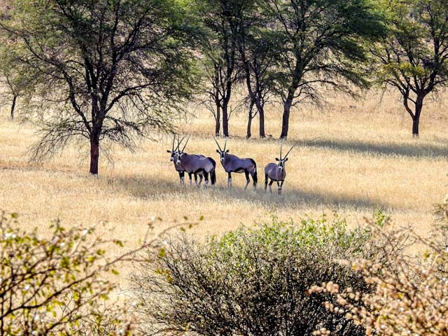kalahari-wueste-namibia-07