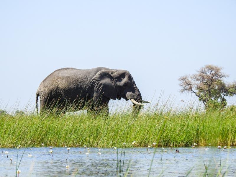 mokoro-okavango-delta-10