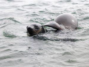 walvis-bay-robben-kayak-10