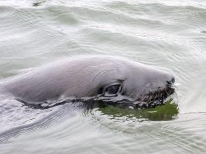 walvis-bay-robben-kayak-12