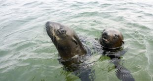 walvis-bay-robben-kayak-13